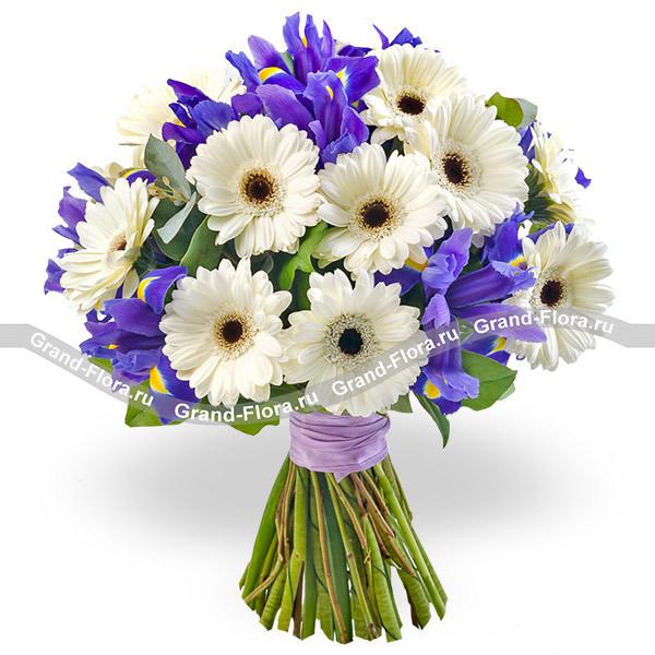 998140ea2fd9e Купить букет цветов Музыка весны - букет из белых гербер и ирисов с ...